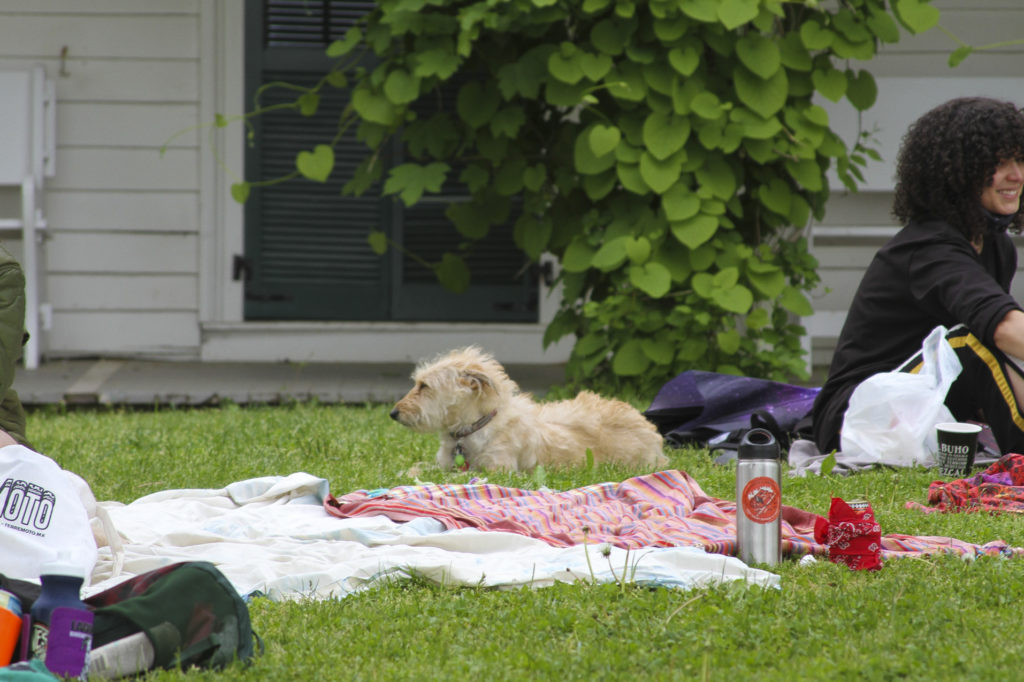 Dog sitting in the grass of Alice Austen House.